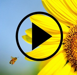 bee video home